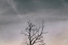 rozgałęzia się drzewa Obrazy Royalty Free