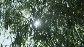 Rozgałęzia się drzewo z którym przepustka promienie słońce zbiory