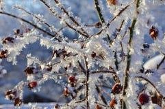rozgałęzia się hoarfrost Fotografia Stock