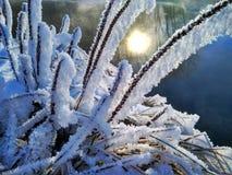 Rozgałęzia się krzaki w hoarfrost, tak jakby karmelizujący zdjęcie stock