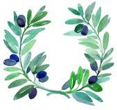 rozgałęzia się oliwki royalty ilustracja