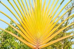 rozgałęzia się palmy Zdjęcie Royalty Free
