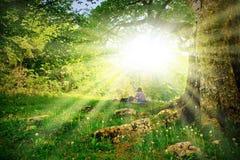rozgałęzia się promieni słońca drzewa Obrazy Royalty Free