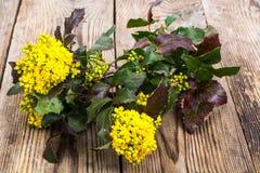Rozgałęzia się z liśćmi i kolorów żółtych kwiatami na drewnianym tle Zdjęcia Royalty Free