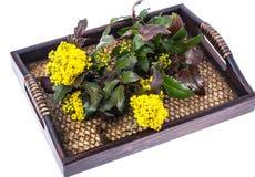 Rozgałęzia się z liśćmi i kolorów żółtych kwiatami na drewnianym tle Fotografia Royalty Free