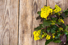 Rozgałęzia się z liśćmi i kolorów żółtych kwiatami na drewnianym tle Obrazy Stock