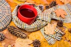 Rozgrzewkowy napój Kubka napoju wygodny aromatyczny szalik i kepi Gorący napój dla jesiennego spaceru Kubek zakrywający otaczając obraz royalty free