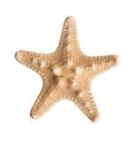 Rozgwiazda Zdjęcie Stock