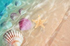 Rozgwiazda i seashell na lecie wyrzucać na brzeg w wodzie morskiej Zdjęcia Royalty Free