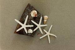 Rozgwiazda i Seashells Obraz Royalty Free
