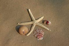 Rozgwiazda i Seashells Obrazy Stock