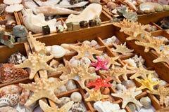 Rozgwiazda i seashells dla sprzedaży Zdjęcie Royalty Free