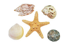 Rozgwiazda i seashells zbliżenie Zdjęcie Royalty Free