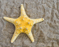 Rozgwiazda kłama na pięknym tkaniny tle Obrazy Stock
