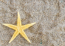 Rozgwiazda kłama na pięknym tkaniny tle obraz royalty free