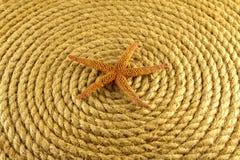Rozgwiazda na arkanie coiled w okręgu od above. Obraz Royalty Free