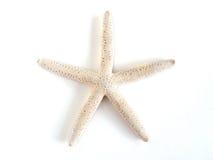 Rozgwiazda na białym tle Fotografia Royalty Free
