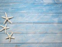 Rozgwiazda na jaskrawym błękitnym tle zdjęcia royalty free