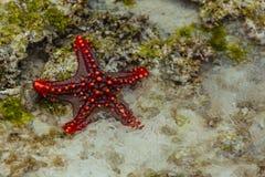 Rozgwiazda na piasku Zdjęcie Royalty Free