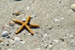 Rozgwiazda na piasku Zdjęcia Stock