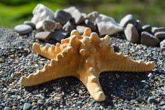 Rozgwiazda na piasku przy seashore Zdjęcie Royalty Free
