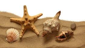 Rozgwiazda na plażowym piasku zdjęcie stock
