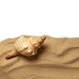 Rozgwiazda na plażowym piasku zdjęcie royalty free