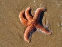 Rozgwiazda na plaży fotografia royalty free