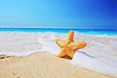 Rozgwiazda na plaży z jasnym niebem i fala Obraz Stock