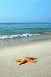 Rozgwiazda na Plaży Obrazy Royalty Free