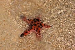 Rozgwiazda na plaży Zdjęcia Royalty Free