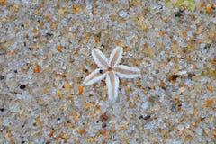 Rozgwiazda na plaży Zdjęcie Royalty Free