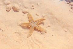 Rozgwiazda na plaży Zdjęcia Stock