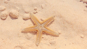 Rozgwiazda na plaży Zdjęcie Stock