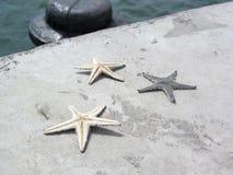 Rozgwiazda nieżywa na cement ziemi Zdjęcie Stock