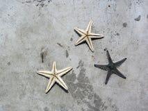 Rozgwiazda nieżywa na cement ziemi Obraz Stock