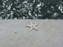Rozgwiazda nieżywa na cement ziemi Zdjęcia Royalty Free