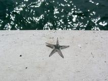 Rozgwiazda nieżywa na cement ziemi Zdjęcia Stock