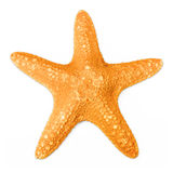 Rozgwiazda odizolowywająca na bielu obraz stock