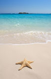 rozgwiazda plażowa obrazy royalty free