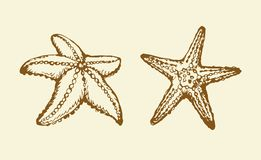 rozgwiazda rysuje tła trawy kwiecistego wektora ilustracji
