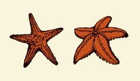 rozgwiazda rysuje tła trawy kwiecistego wektora royalty ilustracja
