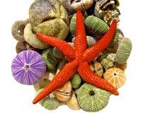 Rozgwiazda, seashells Obrazy Royalty Free