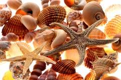 Rozgwiazda, Shell, spirala, żołnierz piechoty morskiej Obraz Stock