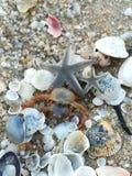 Rozgwiazda, skorupa, morze, plaża, kraby obrazy royalty free