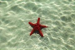 Rozgwiazda w Afryka Fotografia Stock