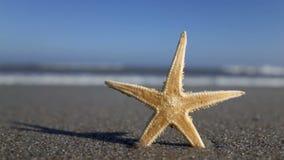 Rozgwiazda z plażą w tle zbiory wideo
