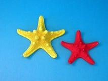 Rozgwiazdy Obraz Stock