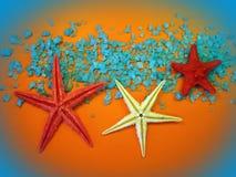 rozgwiazdy Zdjęcia Royalty Free
