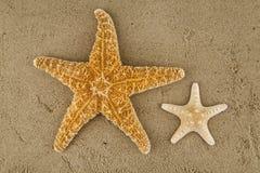 rozgwiazdy Zdjęcia Stock